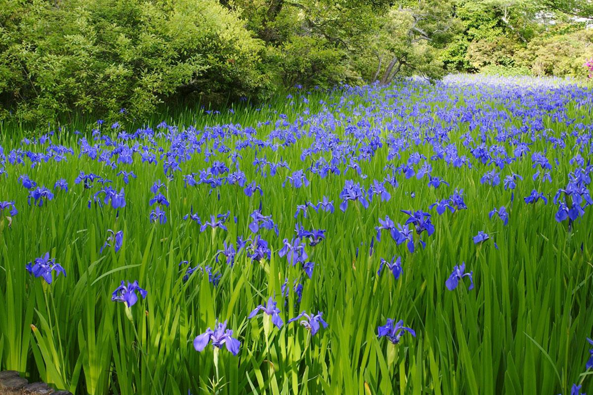 【京都】ゴールデンウィークが見頃の花の名所5選!季節を感じる週末さんぽへ