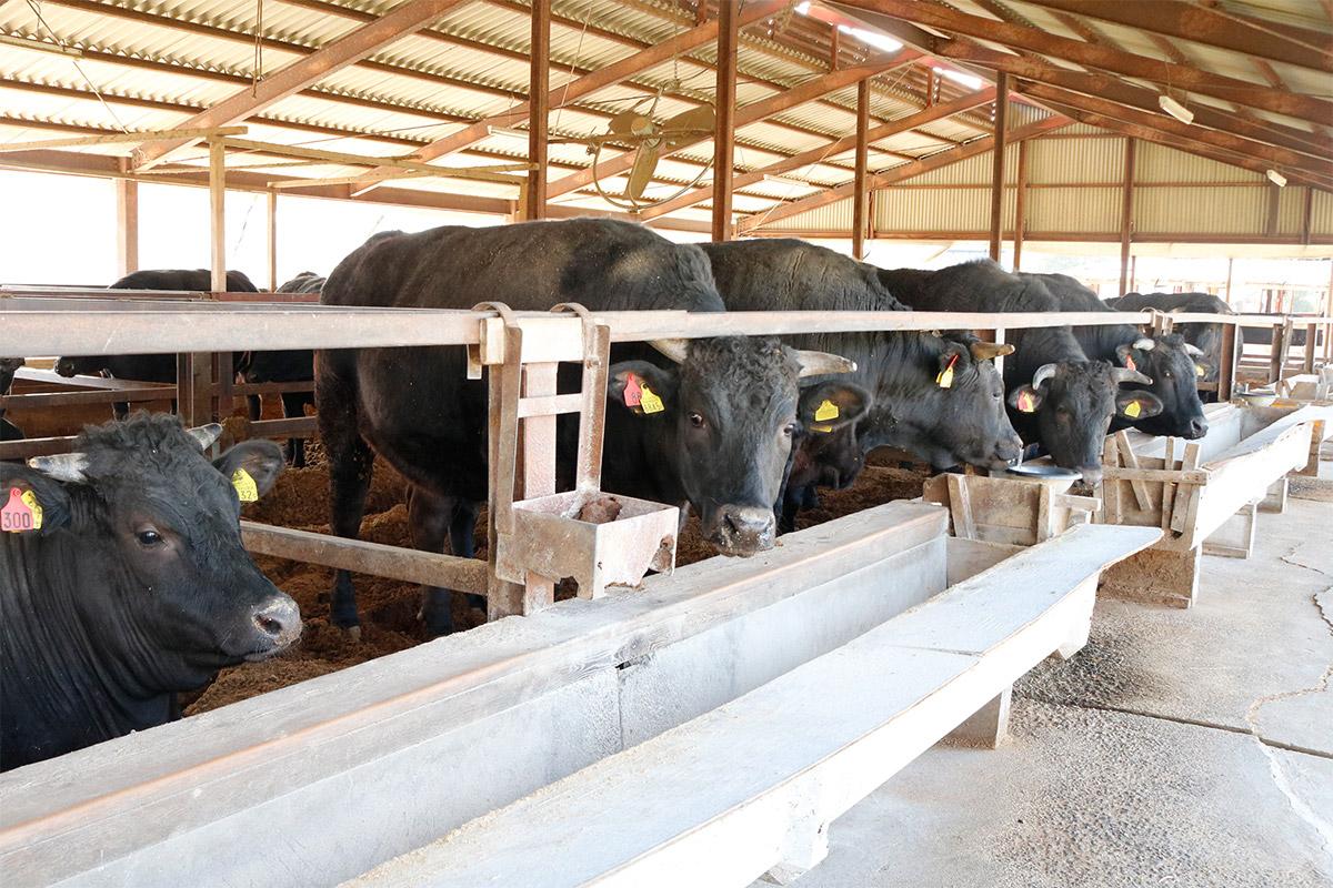 亀岡牛人見畜産