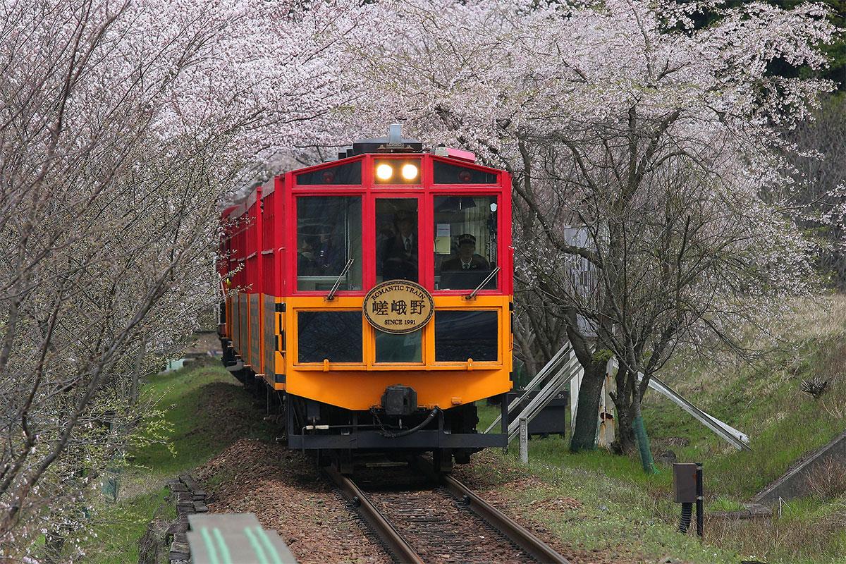 嵯峨野トロッコ列車と桜