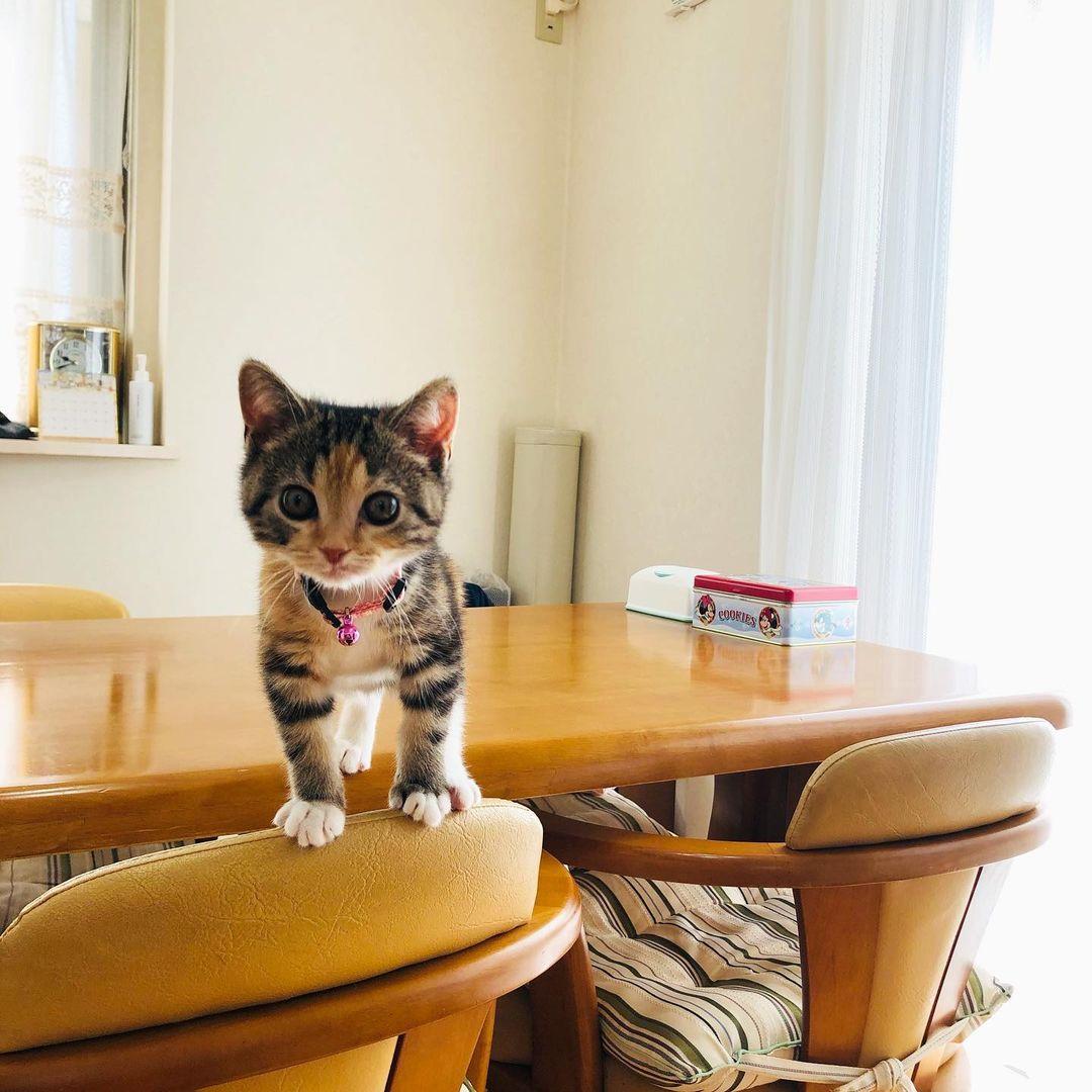 こちらを見ているかわいい子猫