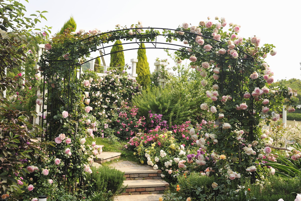 【2021】関西の花イベント厳選5選!週末やGWにおすすめ