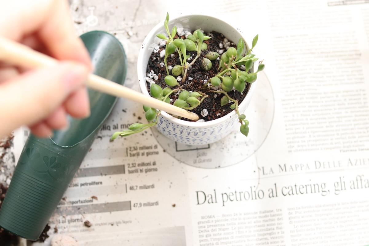 割り箸を土に挿して隙間を埋める