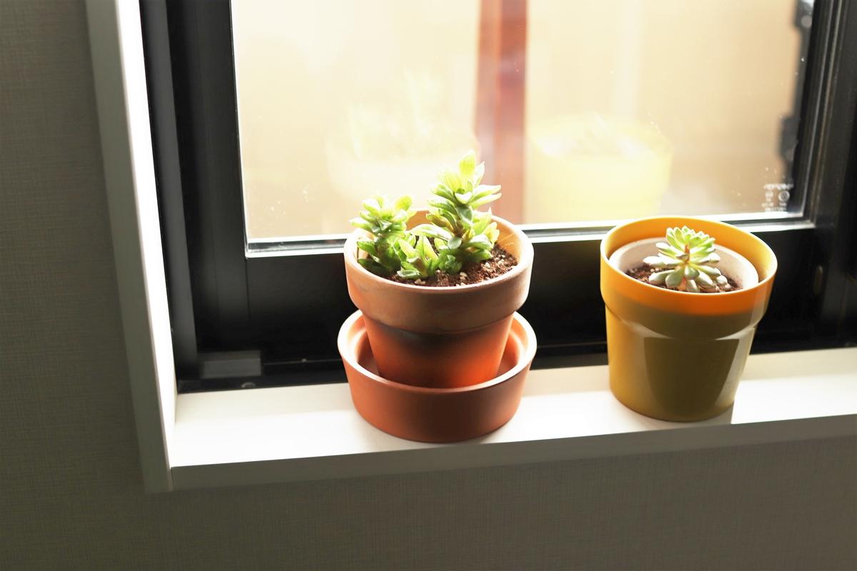 窓際に置いた多肉植物