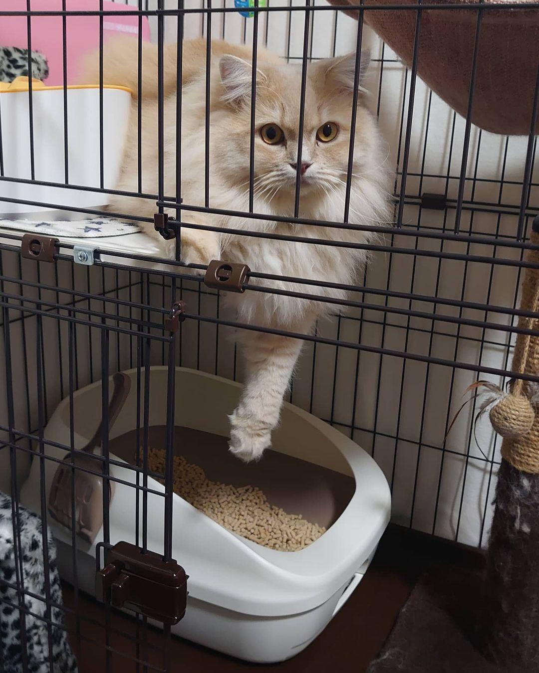 ケージに入っている可愛い猫ちゃん
