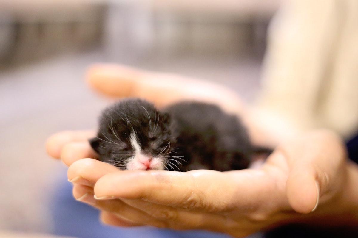 生まれてすぐの子猫