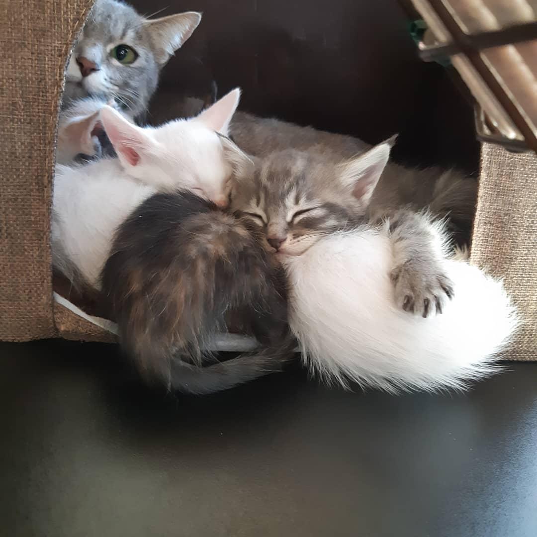 産まれたばかりの仔猫たち