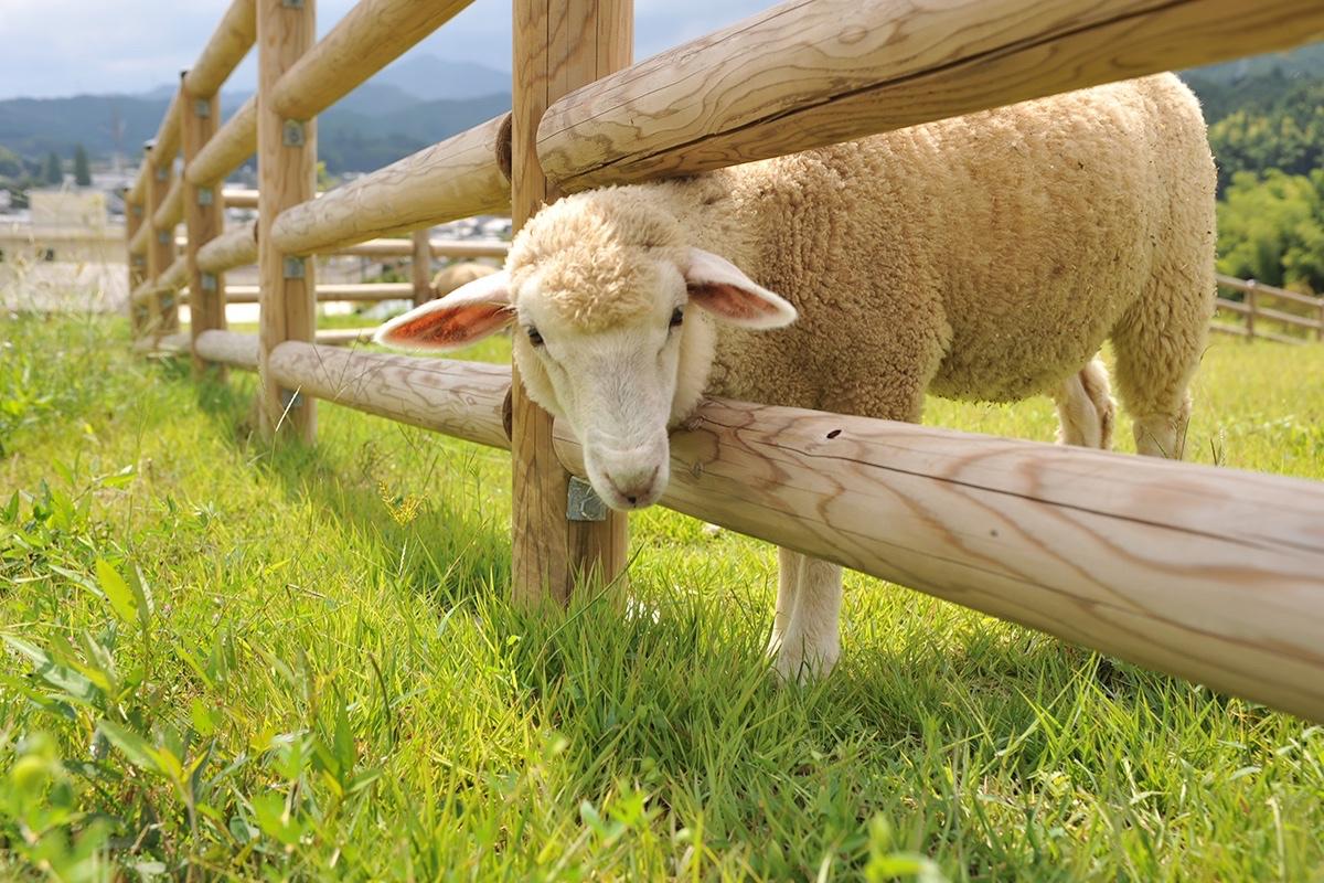 【関西】もふもふの動物に触れあえる牧場や穴場スポット厳選5選