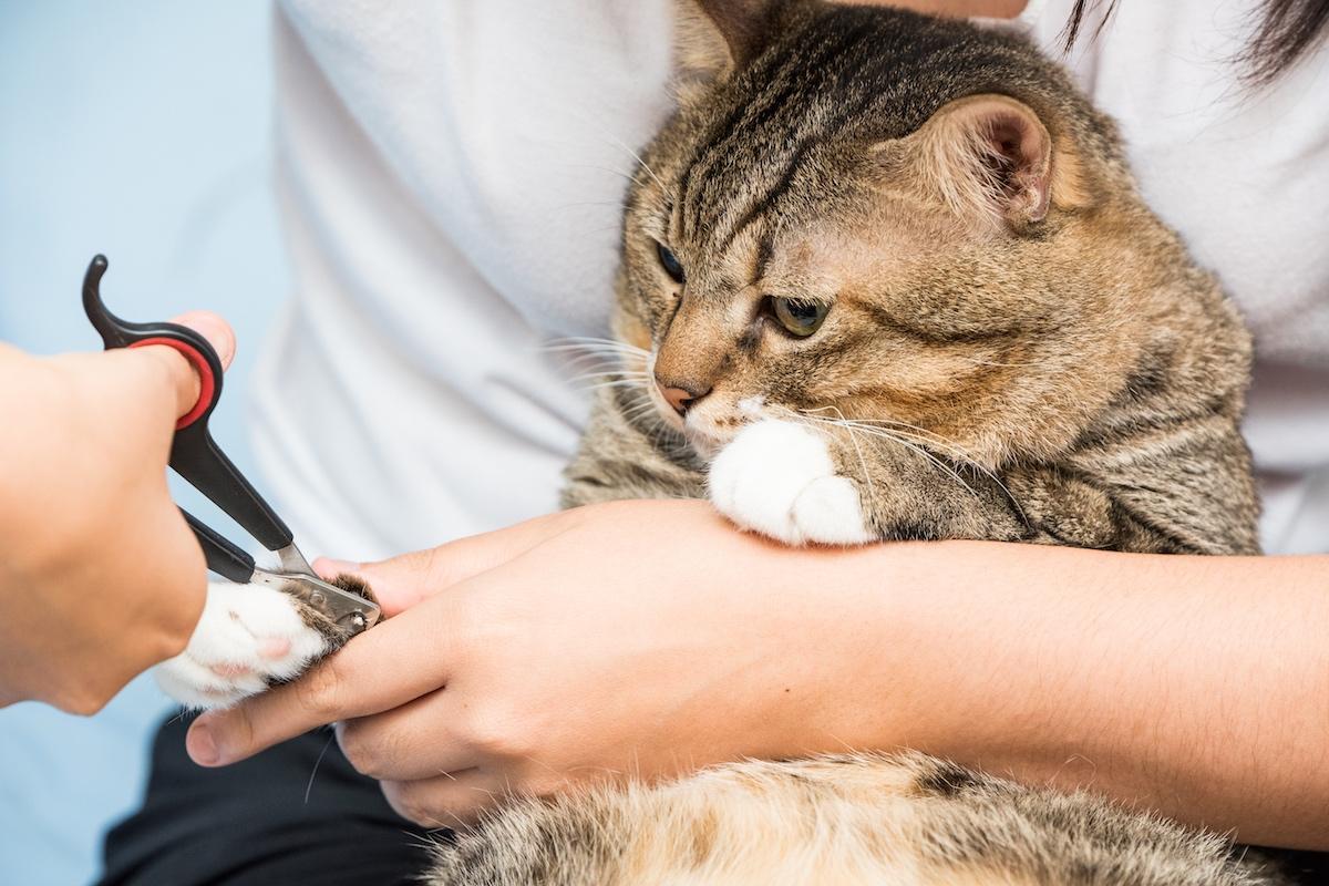 【猫のお手入れ】ブラッシングや爪切りなど部位ごとの簡単ケア方法