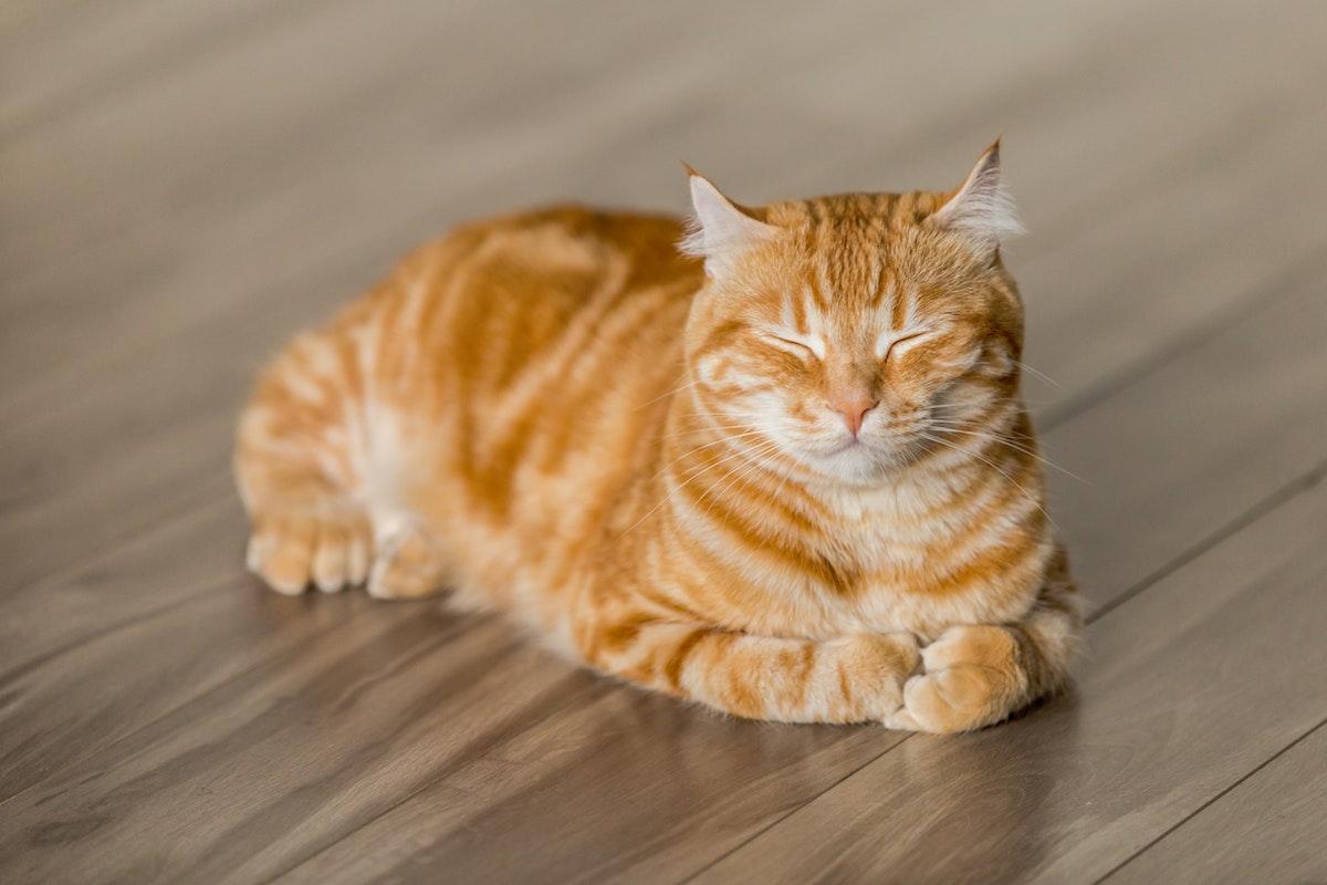 目をつむっている猫