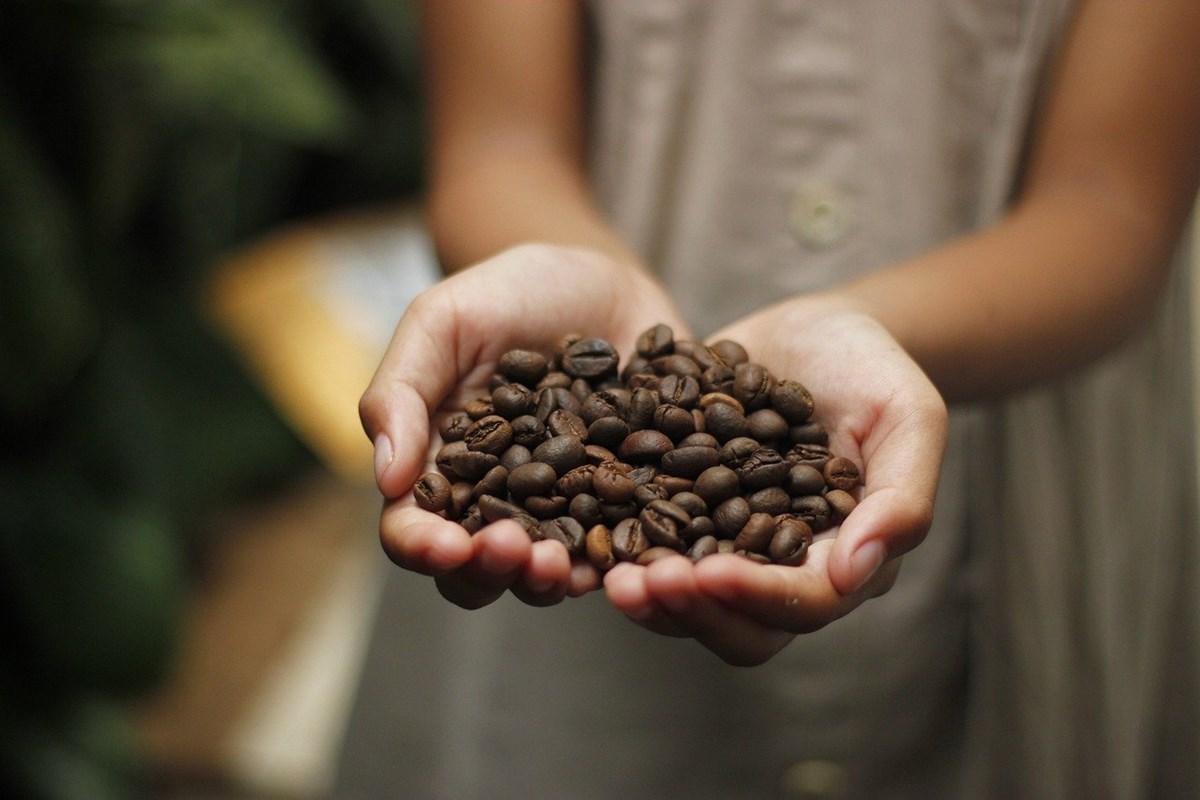 コーヒー豆の産地別の特徴とは?味の違いを知ってお気に入りを見つけよう