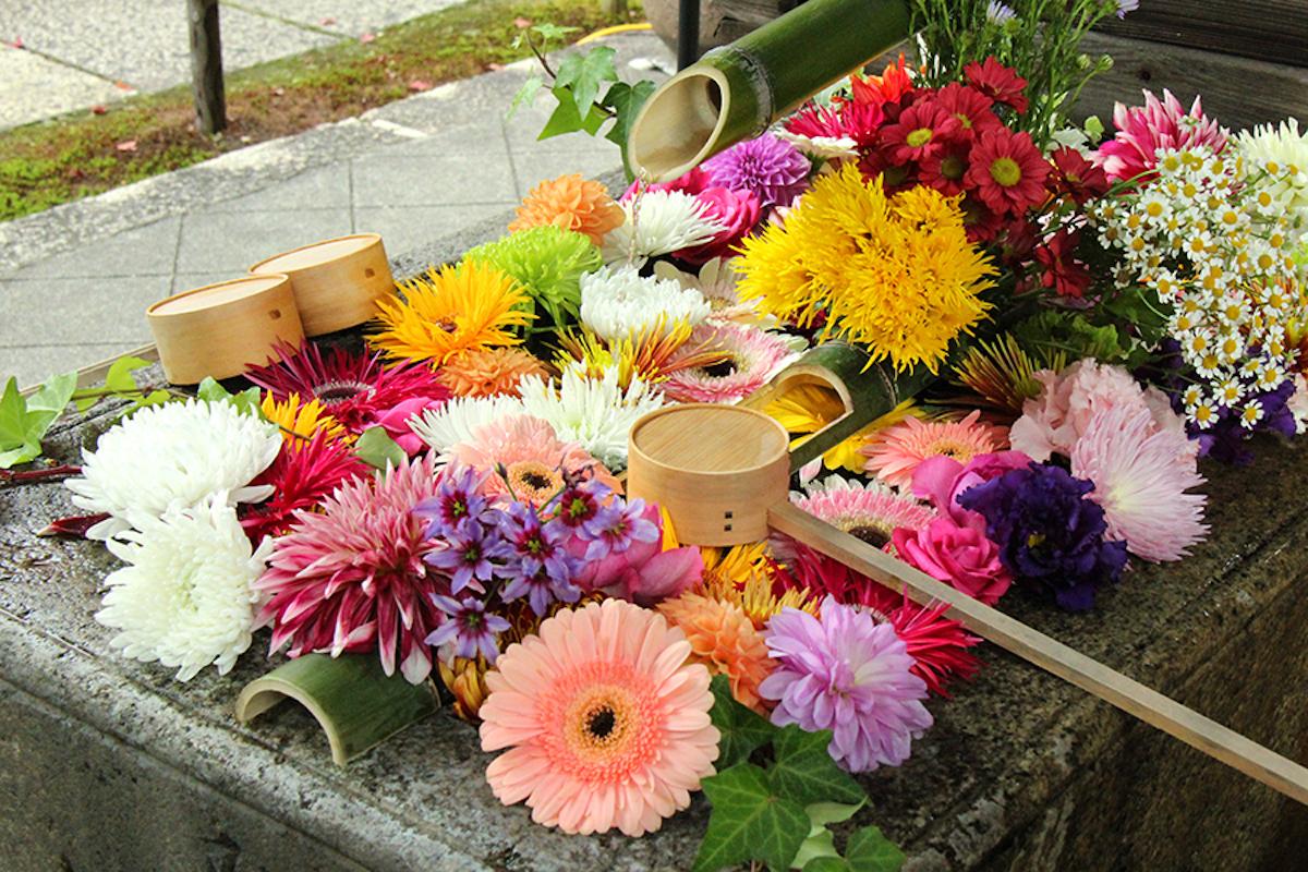 【京都】SNS映え!花手水を見ることができる神社仏閣5選