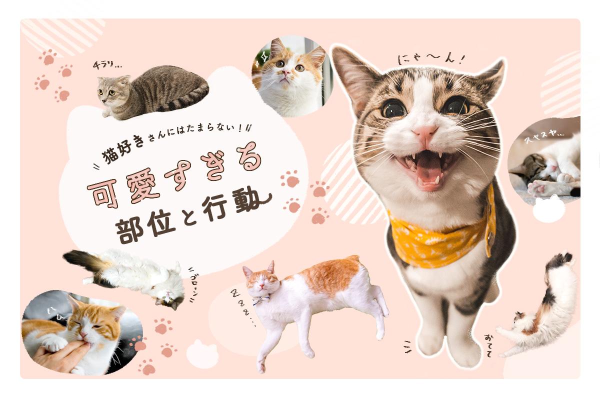 【特集】猫好きさんにはたまらない!猫の可愛すぎる部位と行動を集めました