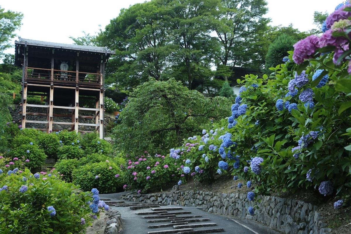 善峯寺の階段のあじさい
