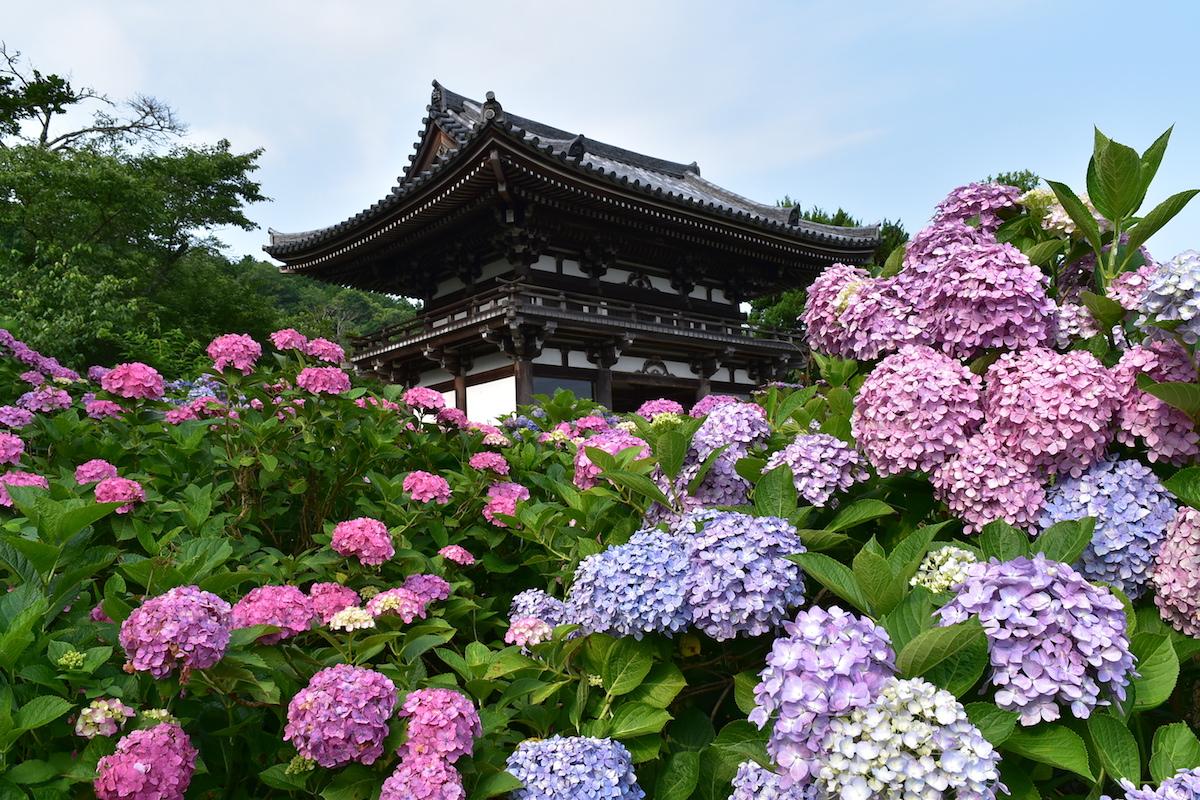 【京都】雨の日こそ美しい!あじさいが咲き誇る京都のお寺5選