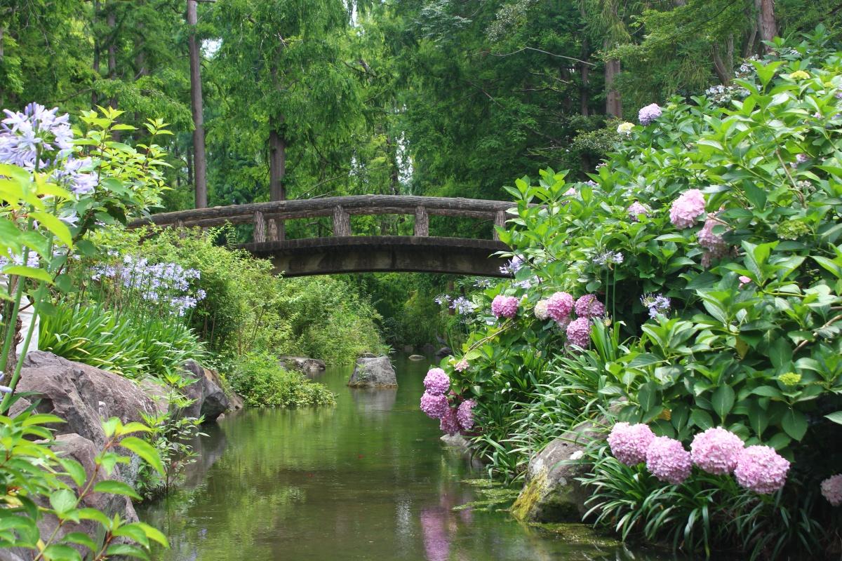 長居植物園の橋とあじさい