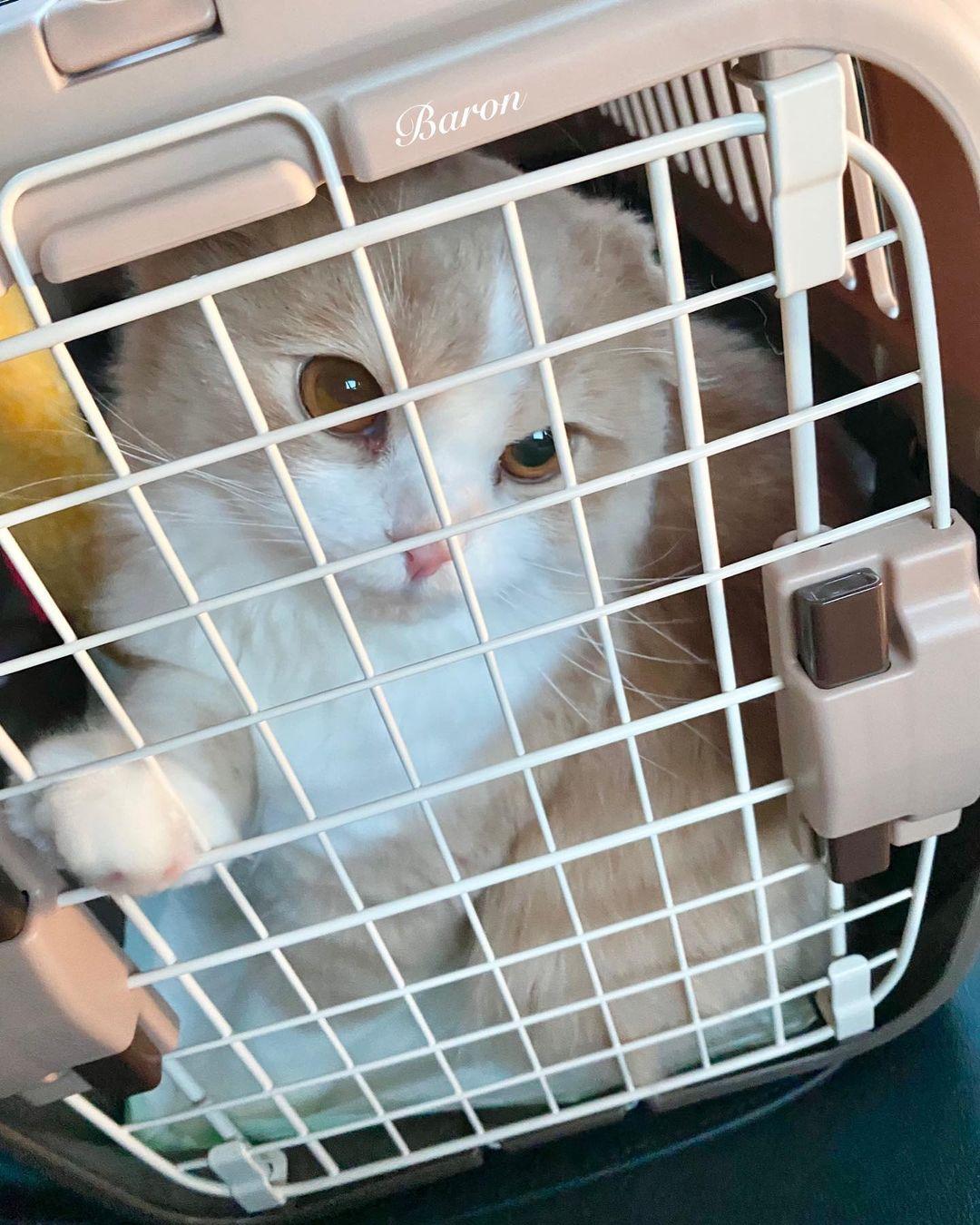 ゲージに入った猫