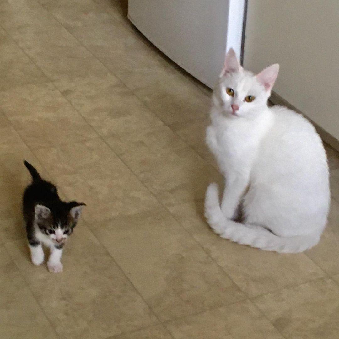 白い猫と黒い子猫