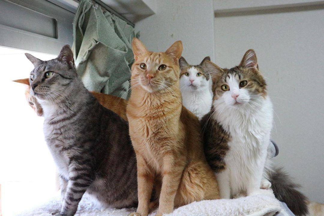 4匹の様々な種類の猫