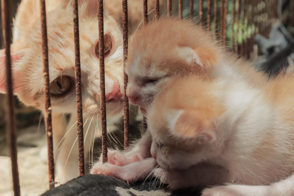 ケージを覗き込む猫