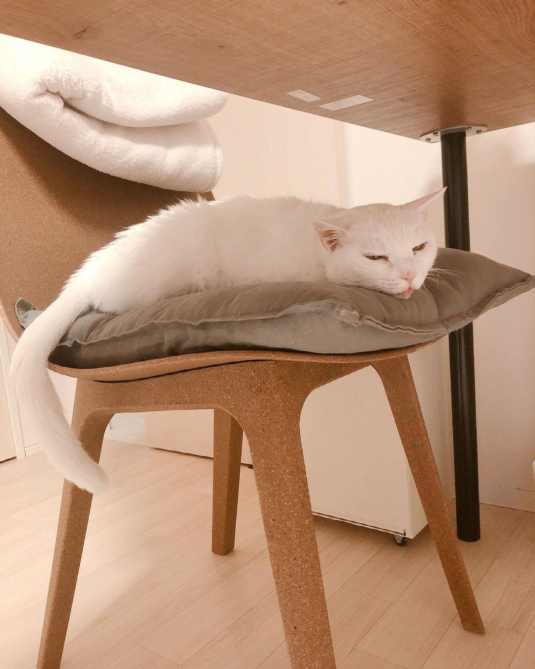 椅子の上で休んでいる猫