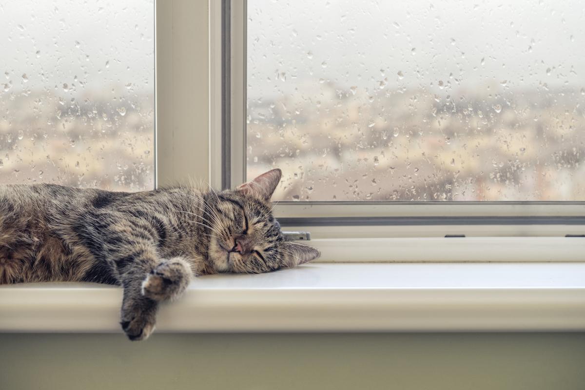 猫の元気がない?梅雨に気をつけたいことや快適に過ごすコツ