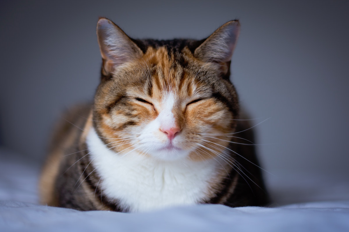 まばたきをする猫