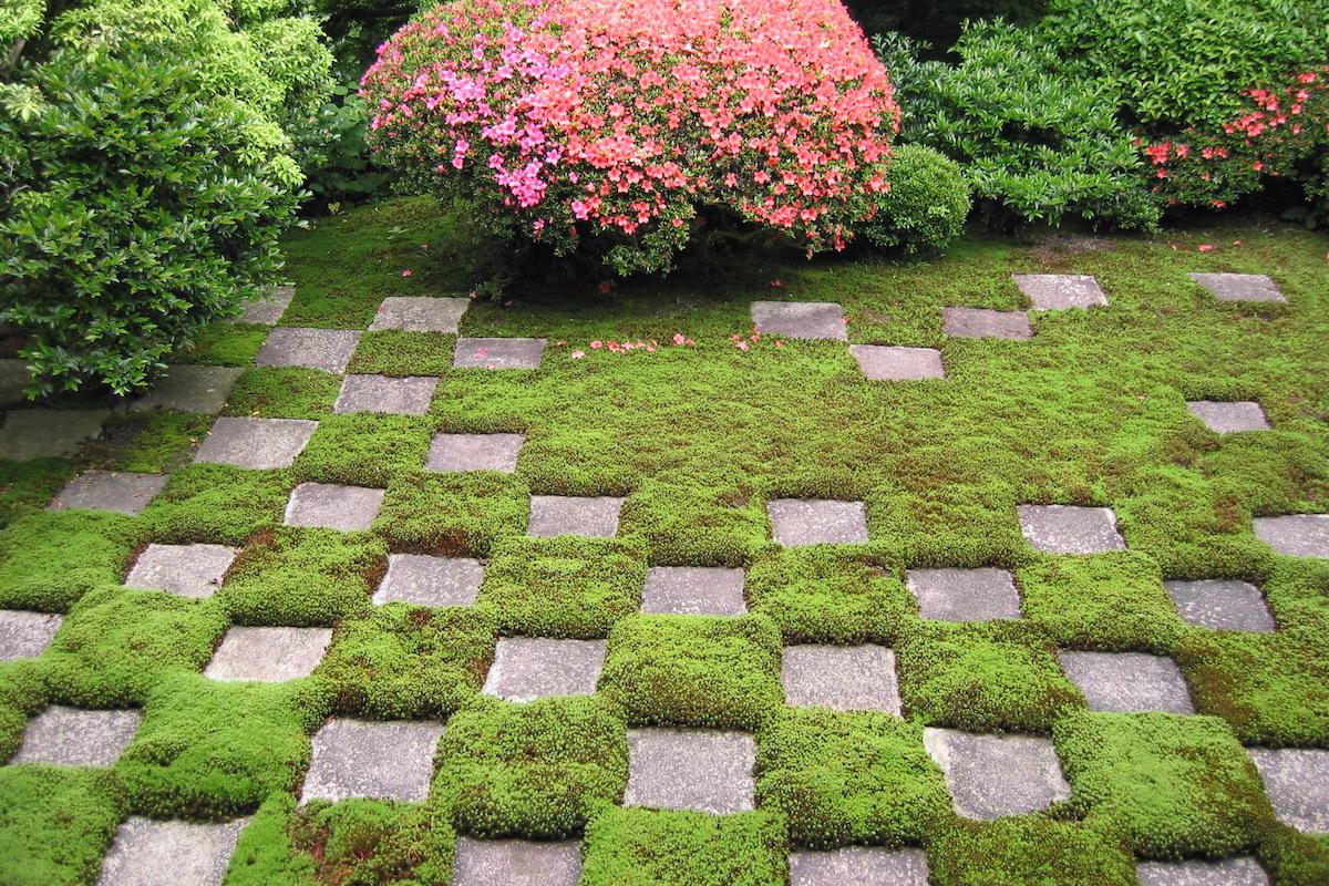 【京都】雨の日にこそ見たい!緑の苔が神秘的で美しいお寺4選