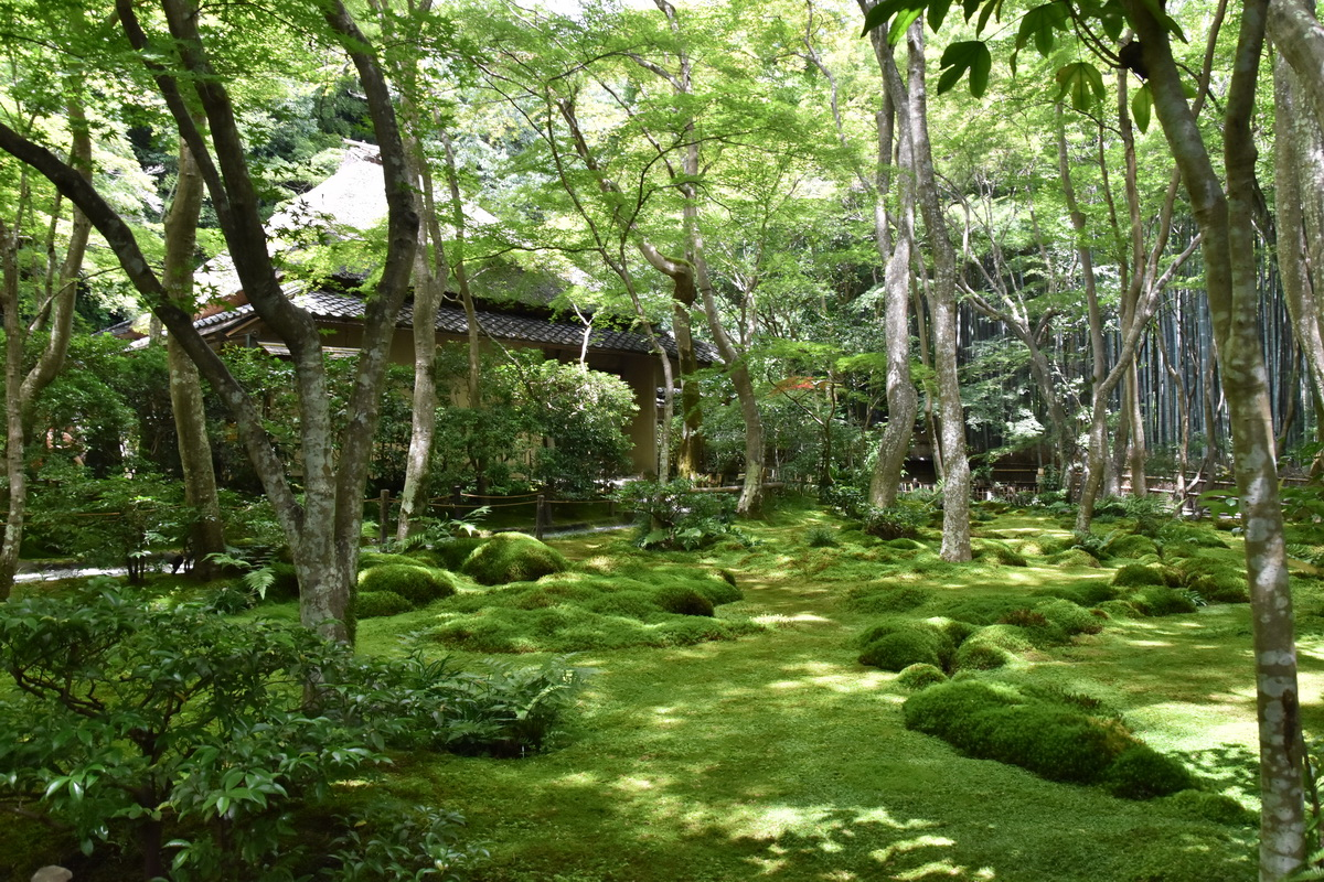 祇王寺の苔絨毯と青もみじ