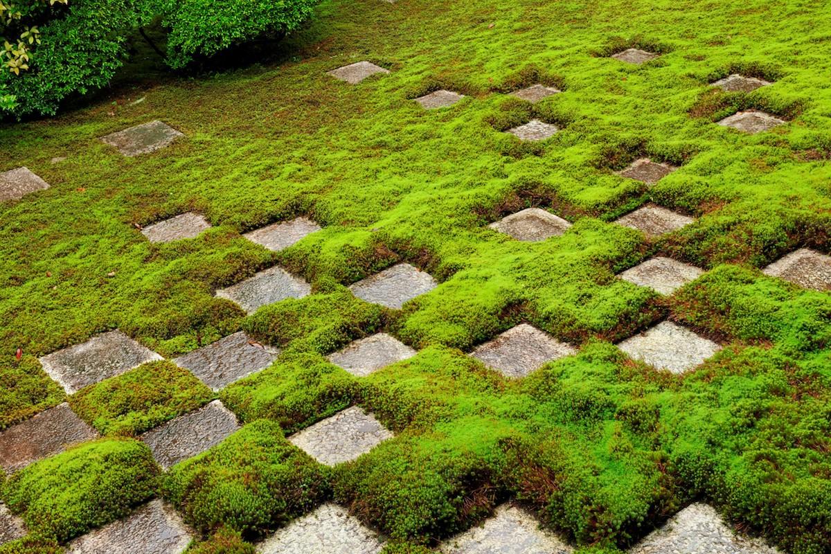 東福寺の市松模様の苔庭