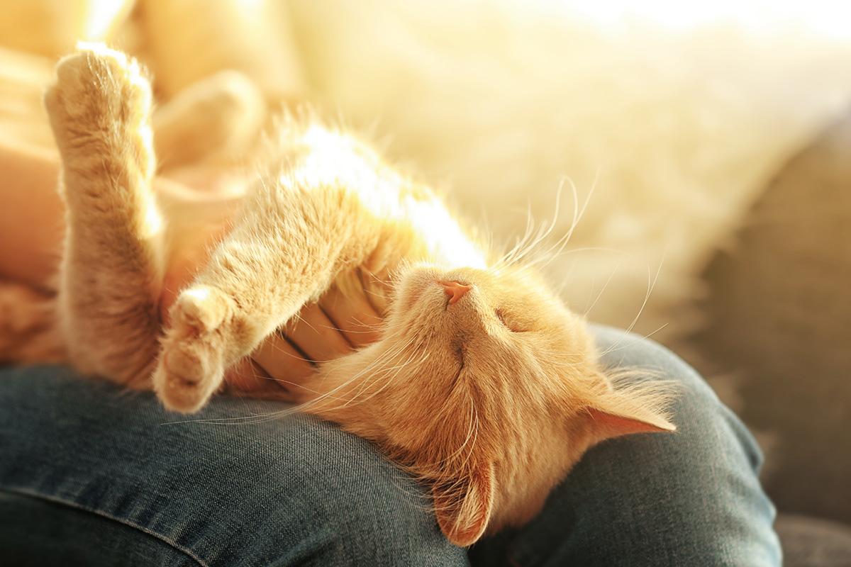 くっついてくる猫