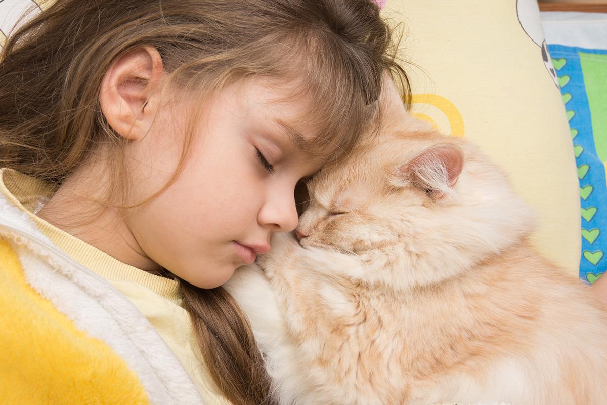 一緒に布団で寝る猫