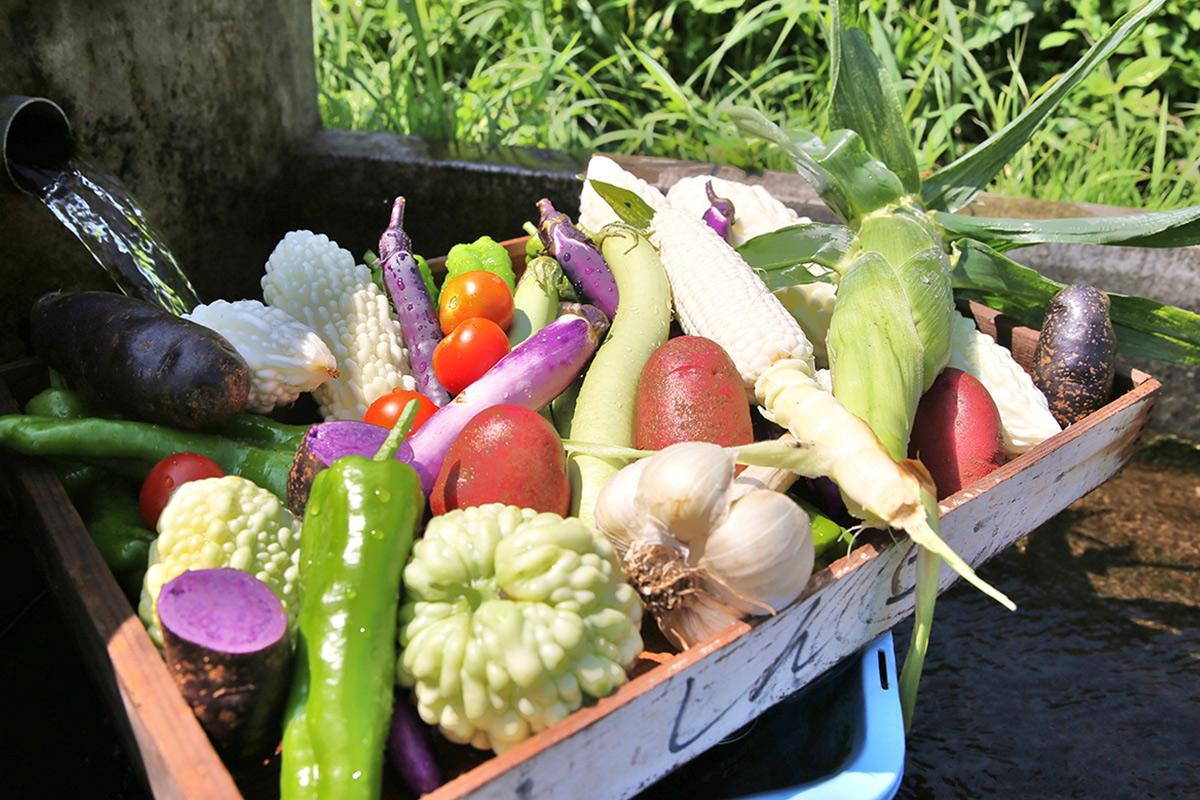 ゆあむの野菜