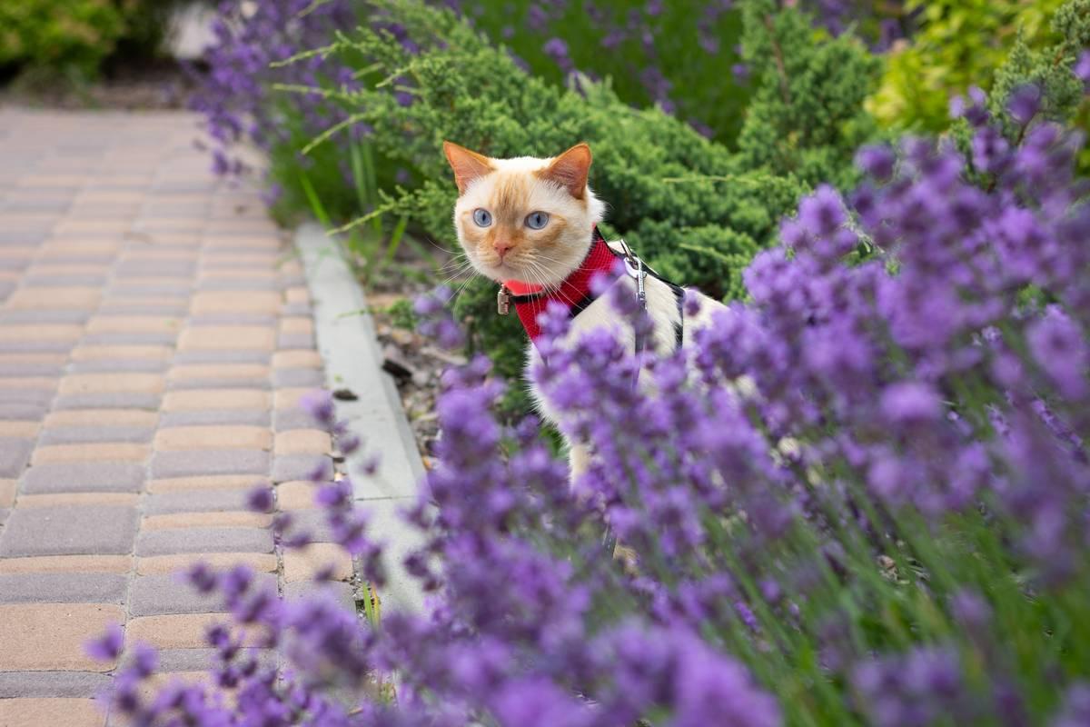 猫に散歩は必要?散歩時に使うハーネスのタイプや気をつけたいこと