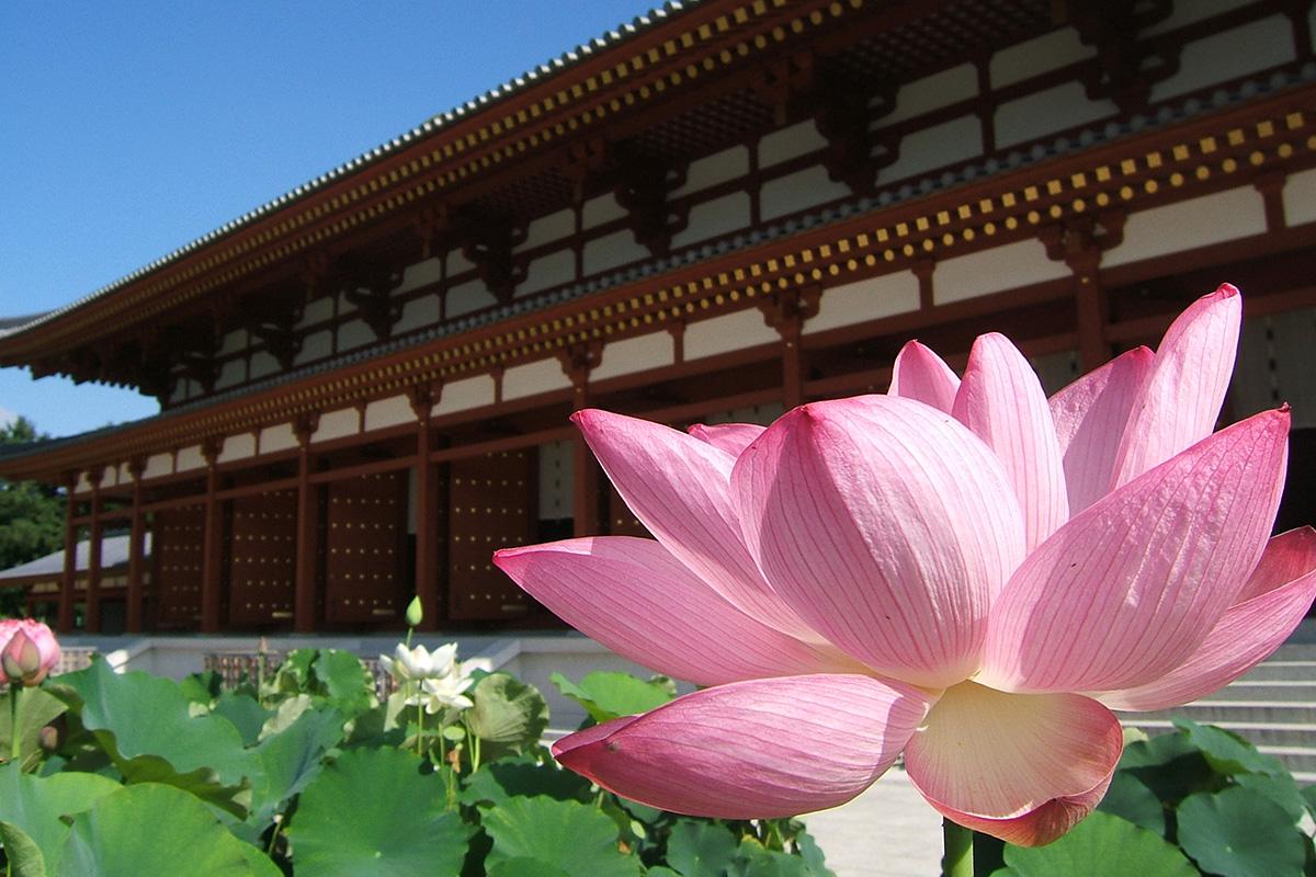 薬師寺の蓮の花と大講堂