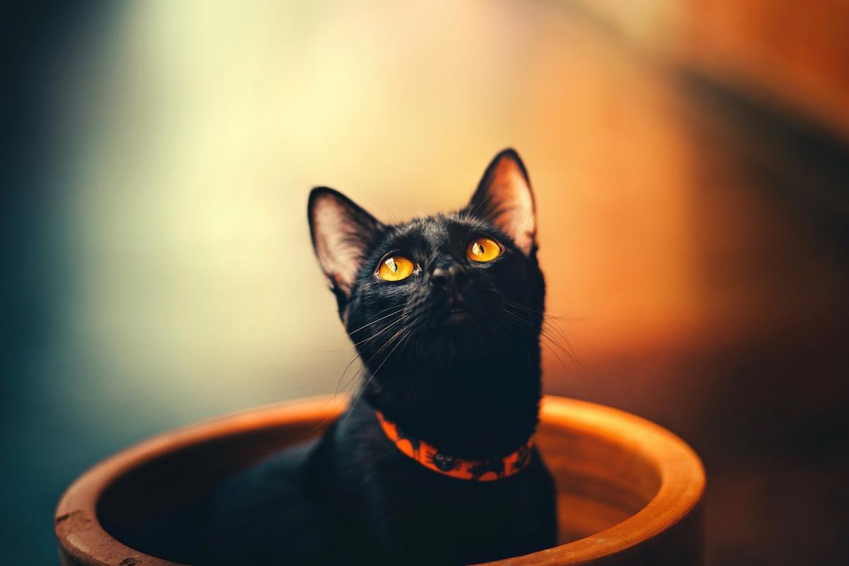 悲しそうな顔をする猫