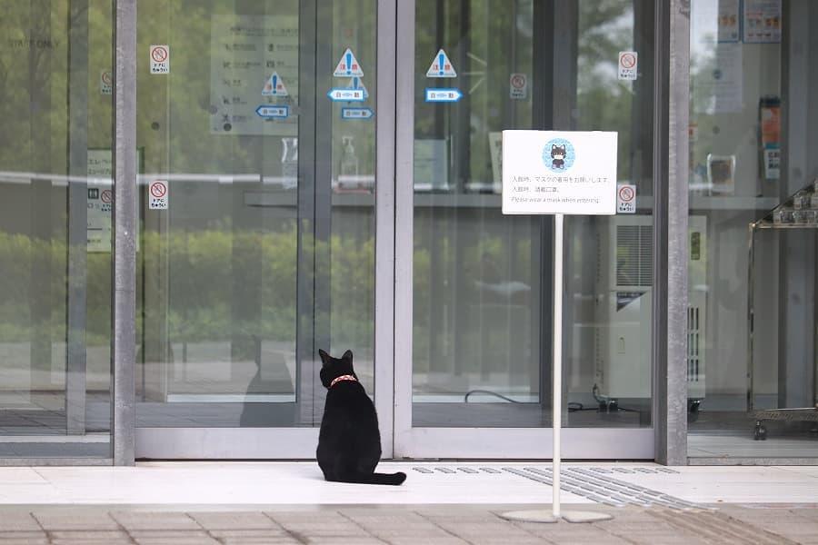 美術館に入ろうとする猫のケンちゃん
