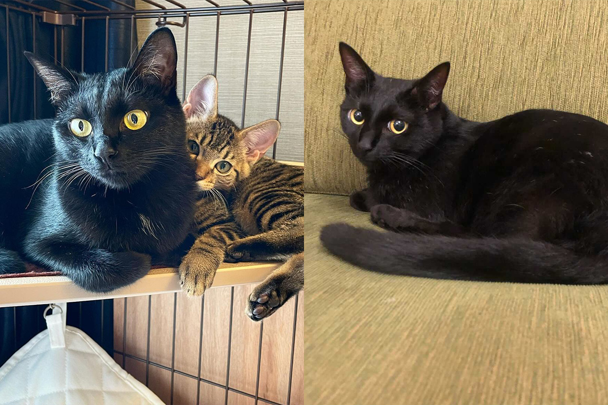 【WeLove黒猫】性格や目の色など「黒猫の魅力」を徹底解剖!