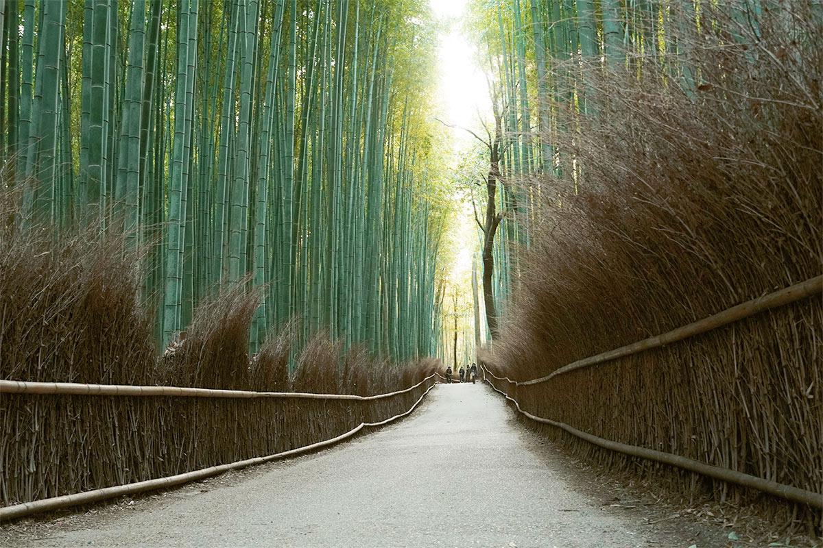 【京都】竹林で涼を感じよう!竹の美しいお出かけスポット5選