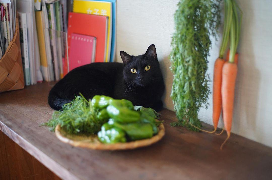 猫とお野菜