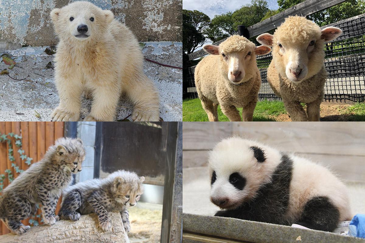 【関⻄】人気のかわいい動物の赤ちゃんに会えるスポット5選