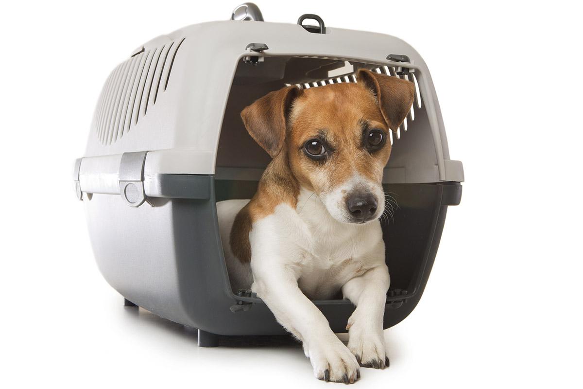 キャリーバッグに入った犬