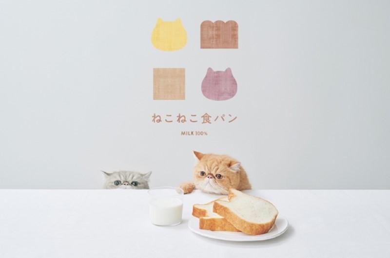 ねこねこ食パンの猫