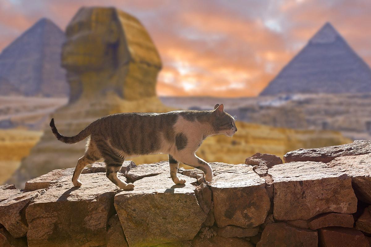エジプトの猫