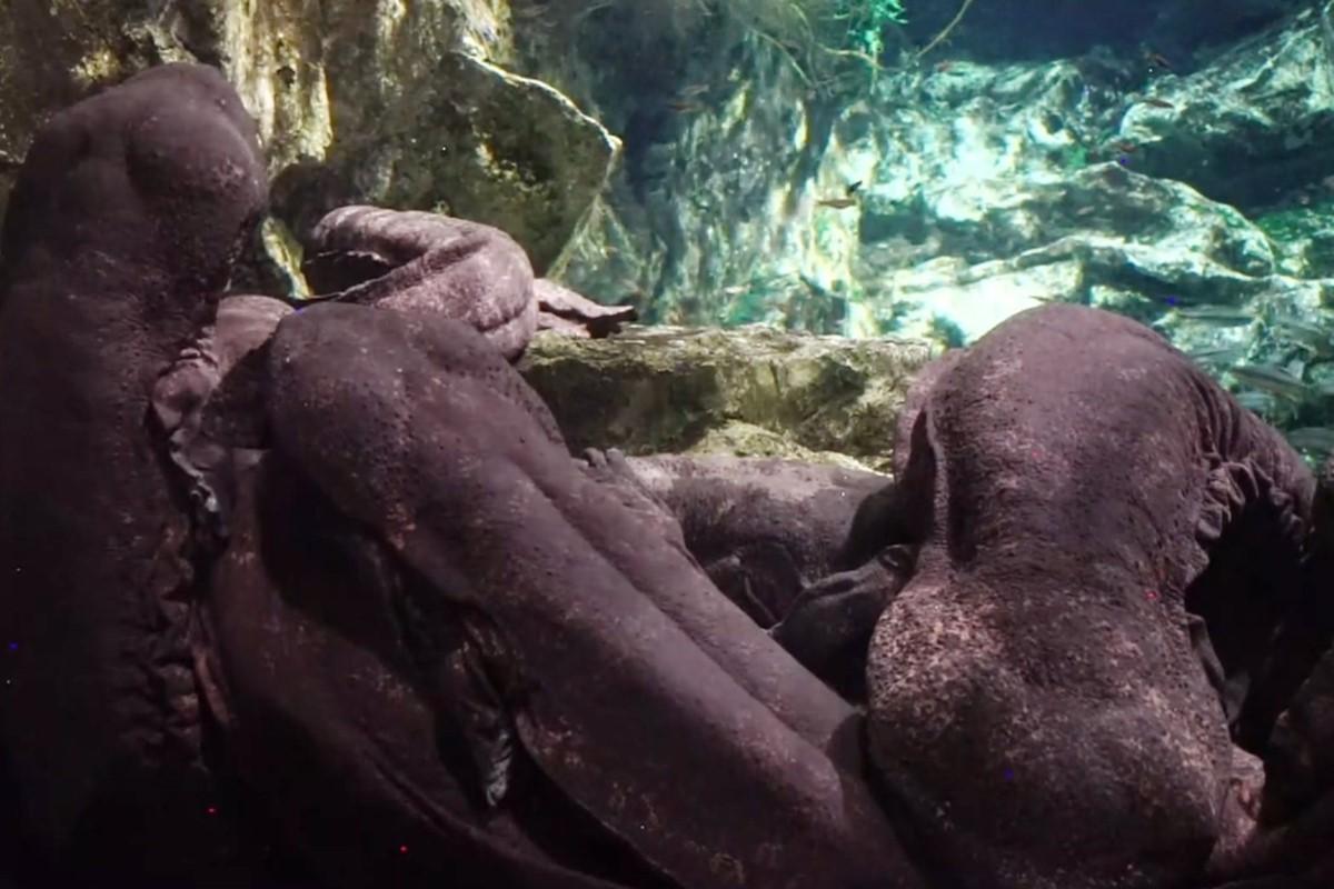 水族館イベント「ねむリウム」開催!オオサンショウウオと幸せな寝落ち体験