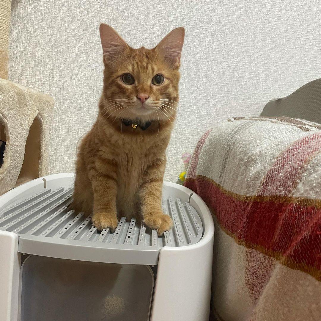トイレハイになる猫