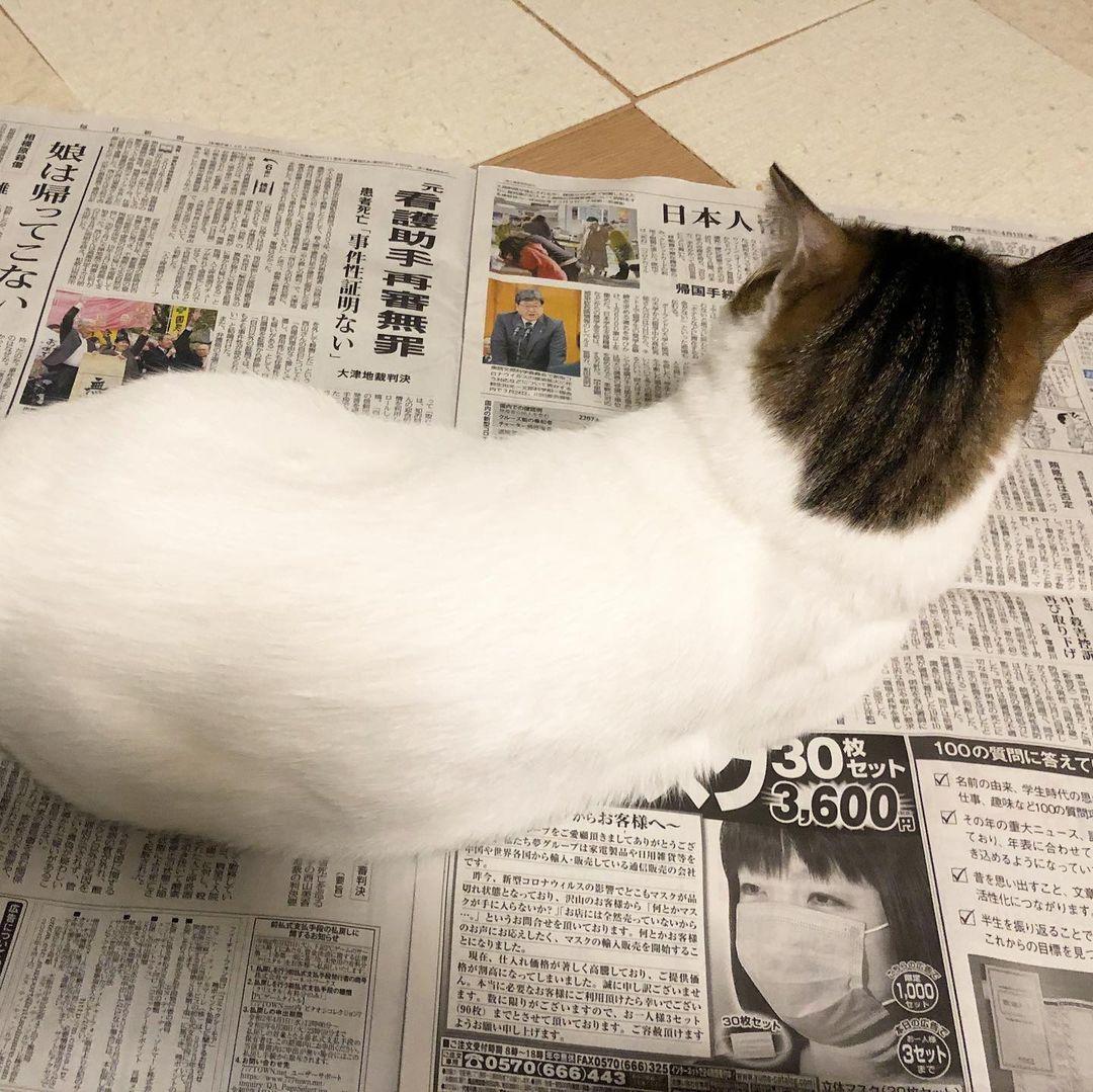 新聞紙の上に乗る猫