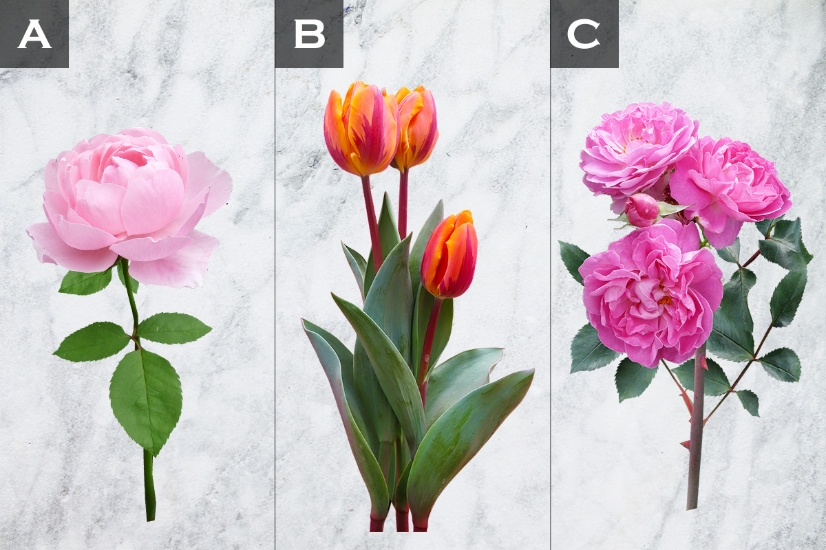 【直感診断】この中で一番気になる花は?