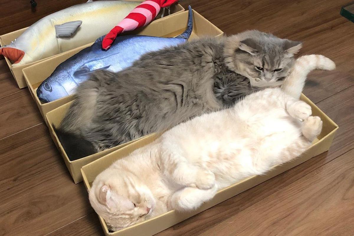 思わずニヤリ!かわいすぎる猫のユニークな行動や習性7選