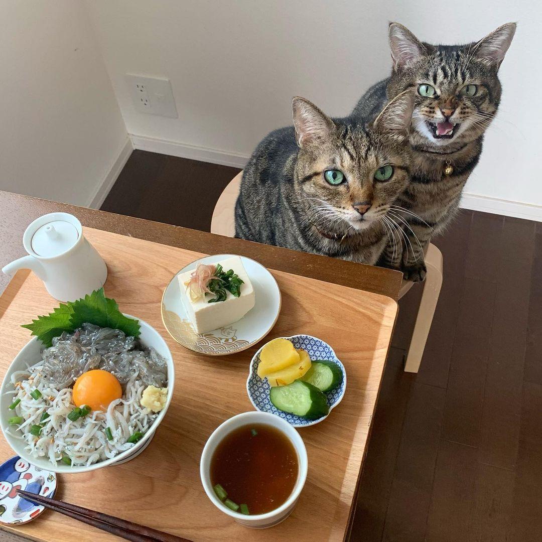 飼い主を見上げる2匹の猫
