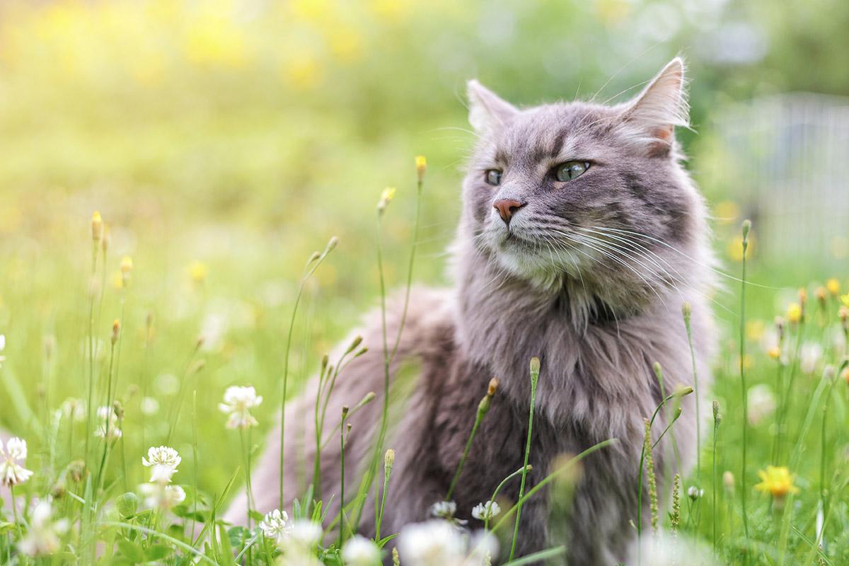 【虹の橋を渡る】大切な愛猫の旅立ちとお別れのために準備しておくこと